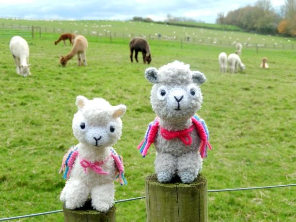 Alpaca-duo