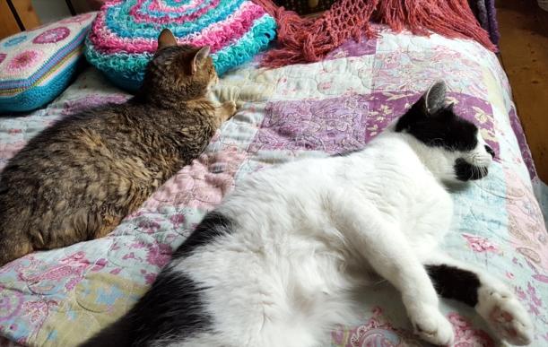 cat-companions