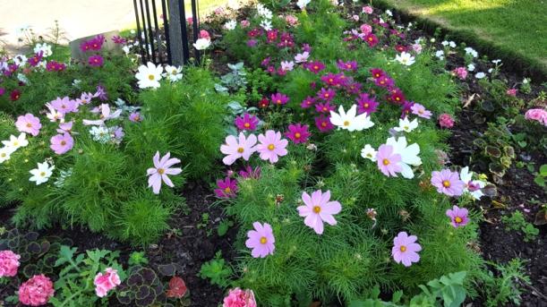 park-flowers