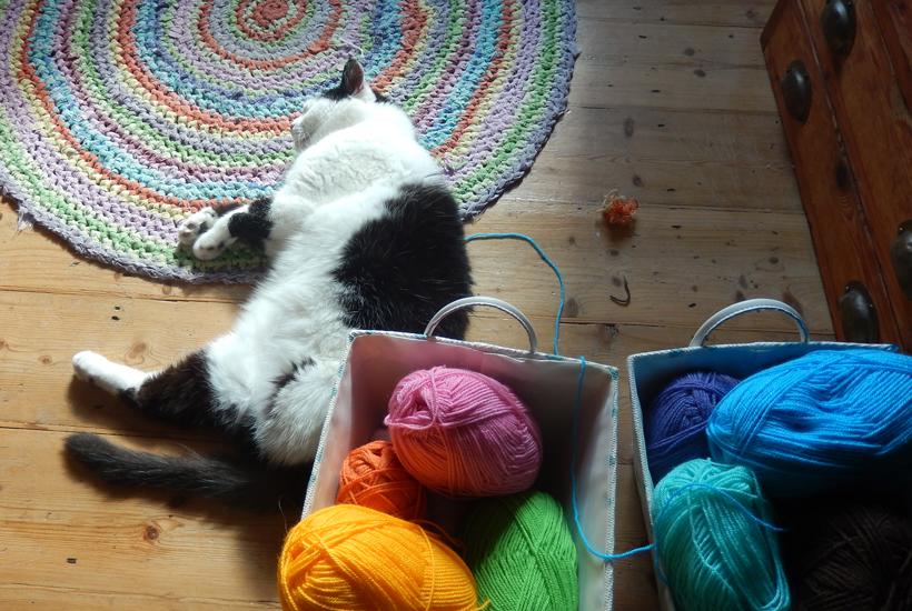 pogo-and-yarn