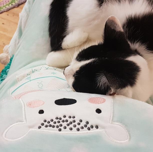 mojo-snuggly